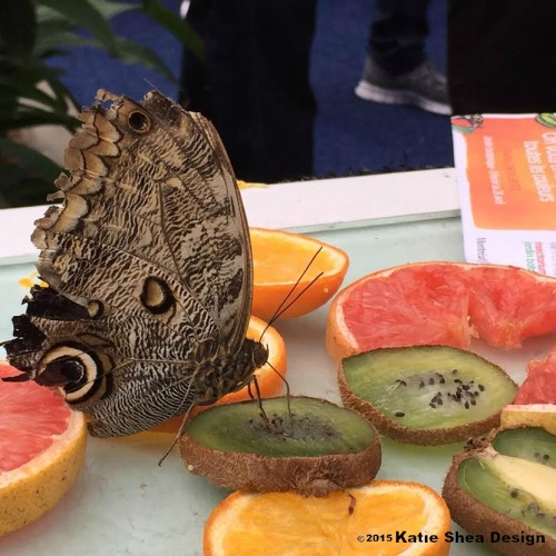 Butterfly Exhibit Montreal image shot with iPhone6 by Katie Shea Design VZWBuzz c2015