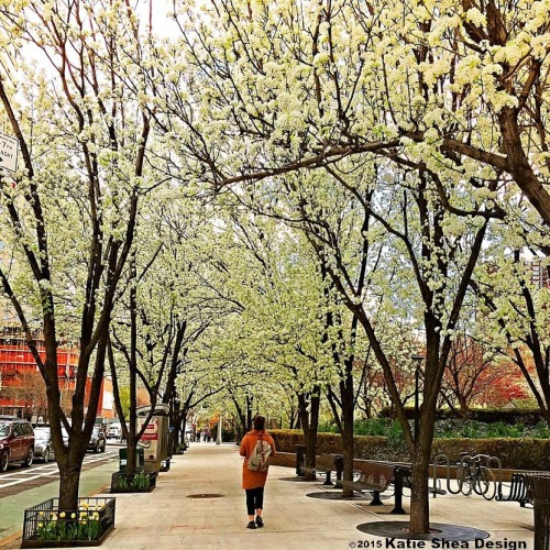 NYC in Bloom image shot with iPhone6 by Katie Shea Design VZWBuzz c2015
