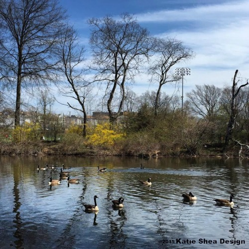 Park in NJ image shot with iPhone6 by Katie Shea Design VZWBuzz c2015