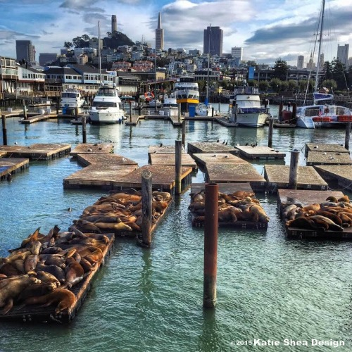 san francisco bay porpoises image shot with iPhone6 by Katie Shea Design c 2015